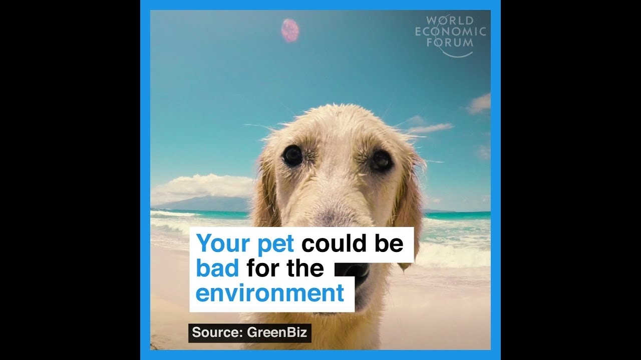 Your pet could be bad for the enviroment