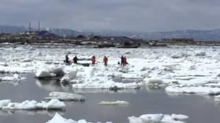 Вызволение косаток из ледового плена на Сахалине
