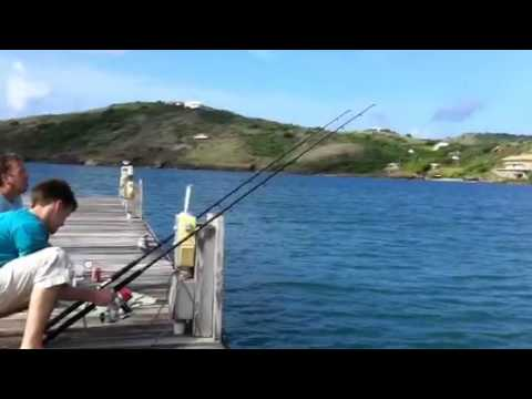 St James. Antigua. Memora Bay catching a sting ray
