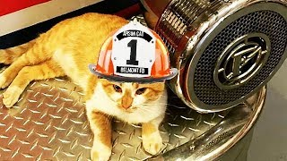 Homeless Cat Takes Over A Firehouse And Decides To Make Them His Forever Family