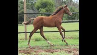 Baryshnikov 2013 colt by Benetton Dream