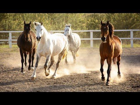 Как заработать на лошадь