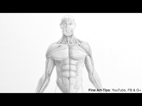 How to Draw a Male Torso - Anatomy Drawing