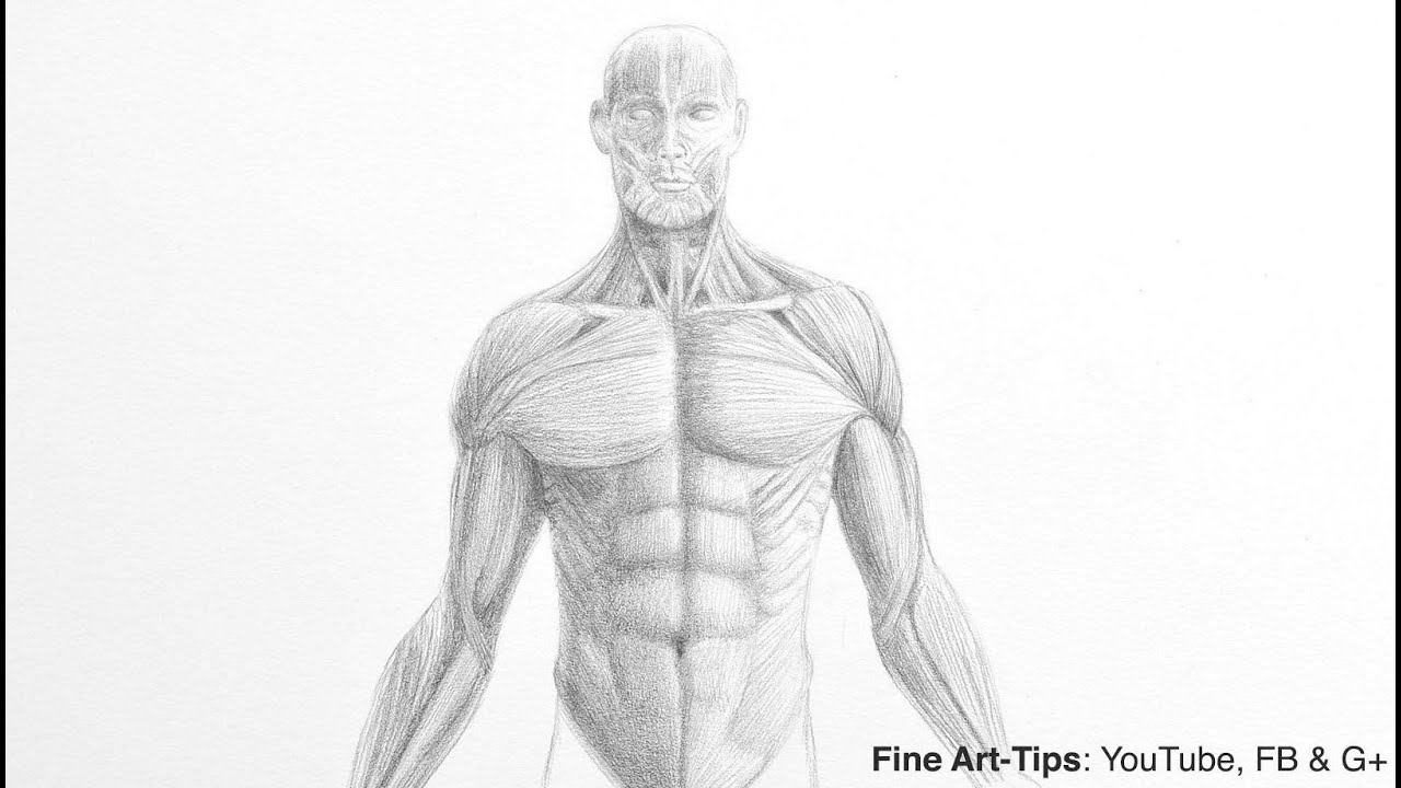 How to Draw a Male Torso - Anatomy Drawing - YouTube
