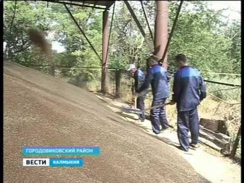 В Городовиковском районе идет уборка зерновых
