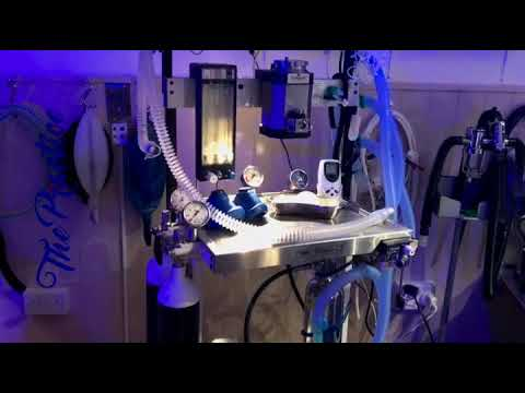Freezma - Full Gyno Removal Surgery from YouTube · Duration:  16 minutes 54 seconds