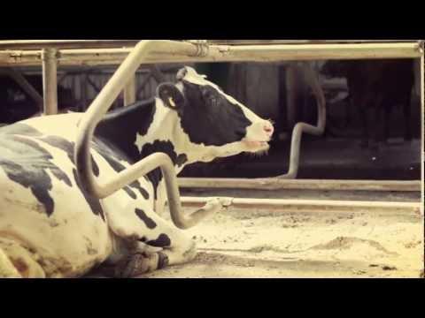 Utfodringsvagn Balder - Reklam - Bala Agri AB