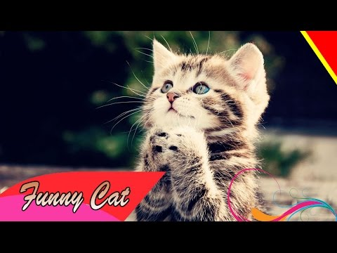 BEST Funny Cat Videos  Funny Pranks 2015 HD collection part 2