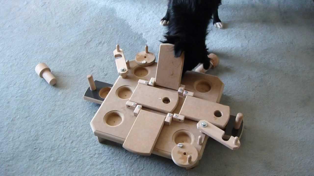 2 intelligenzspielzeug perro mit pauli s commander youtube. Black Bedroom Furniture Sets. Home Design Ideas
