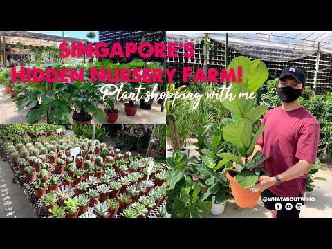 PLANT TOUR / SINGAPORE'S HIDDEN NURSERY FARM | HOUSE PLANT | HOW TO CARE PLANTS | FIDDLE LEAF FIG