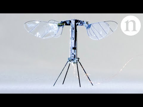 Video: The World's Tiniest Robot Capable Of Flying. 4