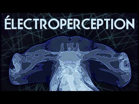 Électroperception