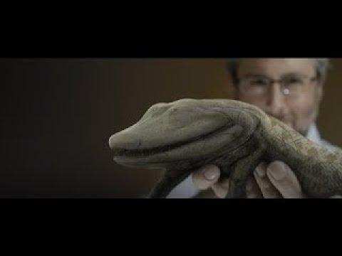 Ancient Human Ancestor Documentary | Finding Tiktaalik : Your Inner Fish English Subtitles