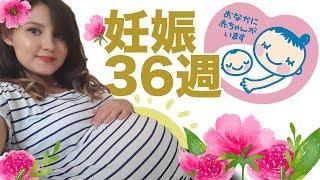 妊娠です /36週・臨月に入りました!