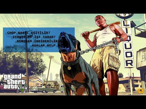 Grand Theft Auto V: iFruit ile Chop Nasıl Eğitilir? [Türkçe Rehber]
