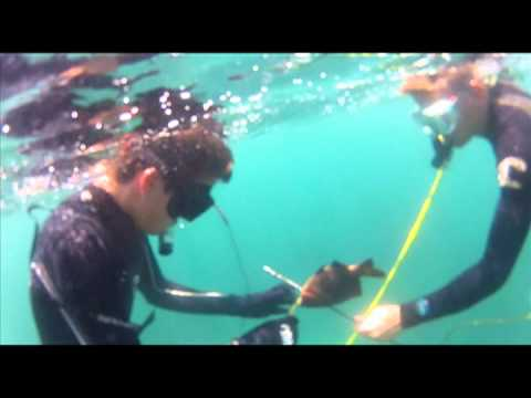 La jolla yellowtail spearfishing doovi for La jolla fishing