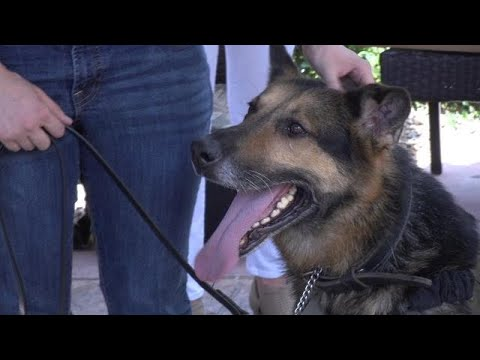 Retired military dog reunited with handler