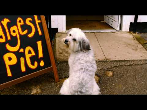 Pudsey The Dog: The Movie  He's Got The Love! Vertigo Films HD