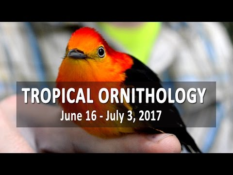 Tropical Ornithology Field Course