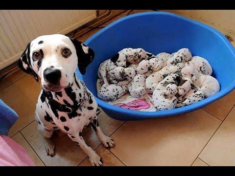 Just Born Puppies