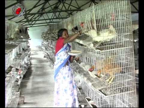 Rabbit farming business plan in hyderabad