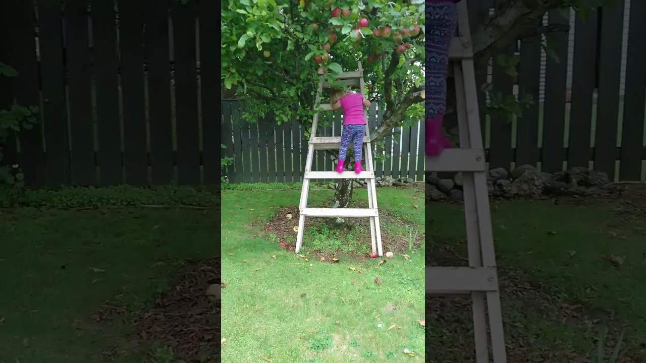 up the ladder in the apple tree up the ladder in the apple tree
