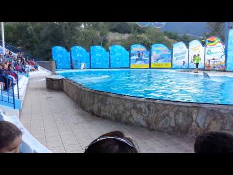YALTA AKVATORIA Show with Dolphins