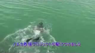 イルカ救出