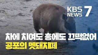도심에 출몰한 공포의 멧돼지떼 현장 포착 / KBS뉴스(News)