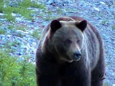Животный мир Байкальских побережий и гор - Видео онлайн
