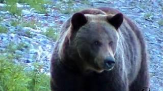 Животный мир Байкальских побережий и гор