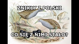 Zwierzęta, które żyły w Polsce ale zanikły.  Część 1