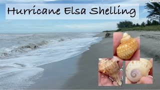 Hunting for sea shells after a hurricane. Elsa stopped by & I went out to see what she left behind!