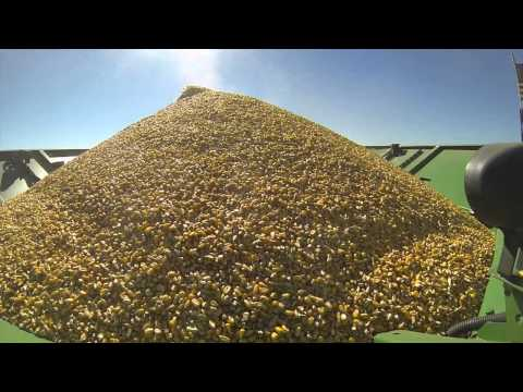 2014 Nebraska Dryland Corn Harvest - GoPro   Raw