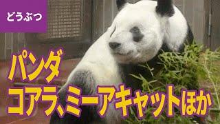 動物園の人気者【動物・生き物 #6】 □登場する動物:ジャイアントパンダ...