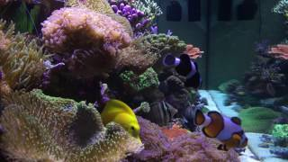 Channel Appetizer | Ep.3 | ReefSpy's 180 Gallon Mixed Reef
