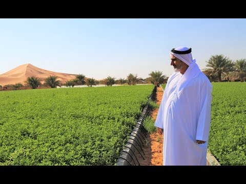 Agriculture In UAE Deserts Is Possible And Profitable