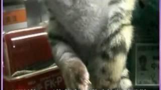 四肢障害的小老虎的成長日記.