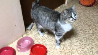 кошка Мария, 2 года