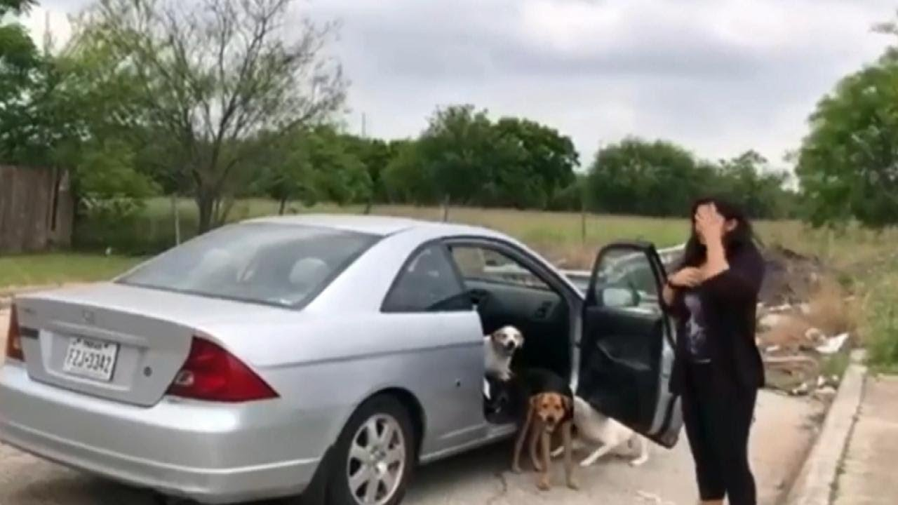 Woman Abandons Dogs On Street Before Driving Off Youtube