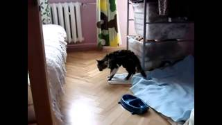 Cat And Dog Fails!