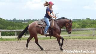 Sassy Zips Tivio - riding in outdoor arena #1 - ValleyViewRanch.net