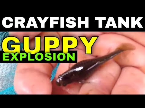 Too Many Fish | Growing Crayfish For Food #9