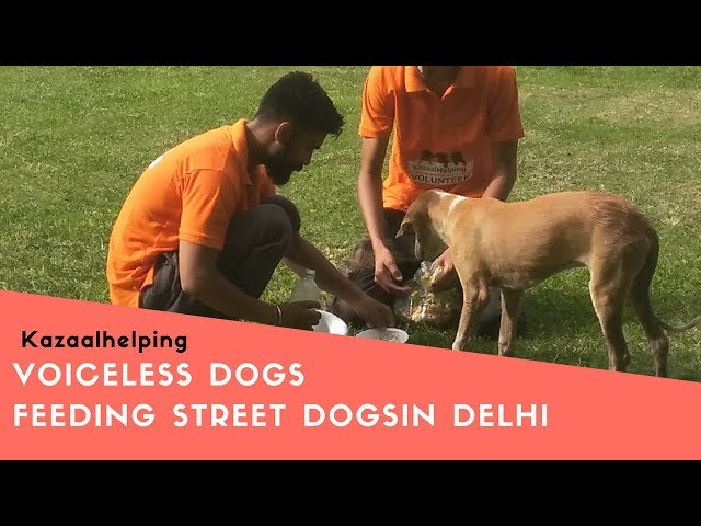Feeding For Street Dogs At Netaji Subhash Place In Delhi Day 1 | Ngo For Street Dogs