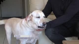 Environnement : Eliott, un chien écolo à Montigny-le-Bretonneux
