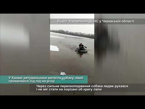 Телеканал АНТЕНА: У Каневі рятувальники витягли собаку, який провалився під лід на річці