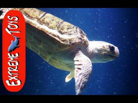 The Sea Creature Adventure. 'Exploring Tide Pools, and the Aquarium'