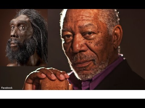 Origins of Man Documentary-Narrated by Morgan Freeman HD 201