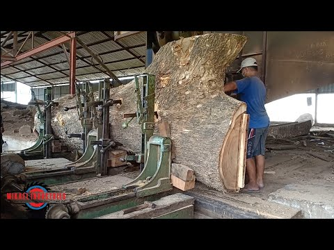 Dangerous Biggest Wood Cutting