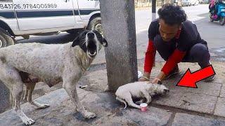Собака громко лаяла, зовя прохожих на помощь своему щенку